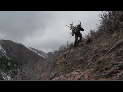 2015 Utah Extended Archery Elk Hunting Brandon Pitcher/Summer Sheds And Scouting