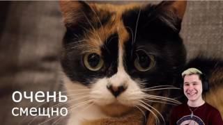 НОВЫЙ ВЕЧНЫЙ ТЕРРАРИУМ! - РЕАКЦИЯ НА SLIVKISHOW