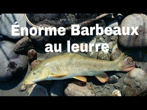Énorme Barbeaux du Gave de Pau au leurre + bonus