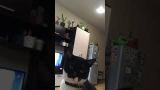Жестокое издевательство над животным: кот просит мороженое