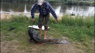 Ловля сома 26 кг на реке Припять Припятские сомы