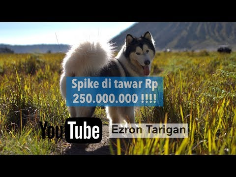 Spike di tawar orang Rp 250000000 !!!  Ezron Tarigan & Humble Spiker #Dailyvlog #StoryTelling #1