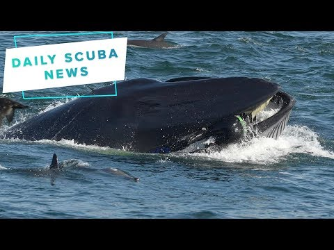 Daily Scuba News - Man Gets Eaten By A Whale