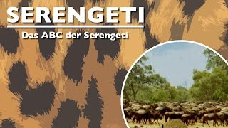 Das ABC der Serengeti (2011) [Dokumentation] | Film (deutsch)
