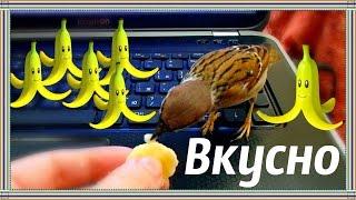 Воробей - бананоед. Нямка.