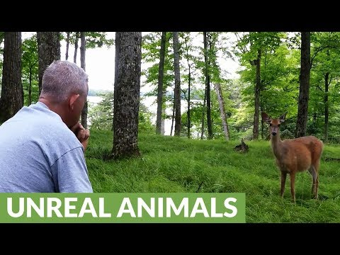 Man crunches apple, wild deer comes running from the forest