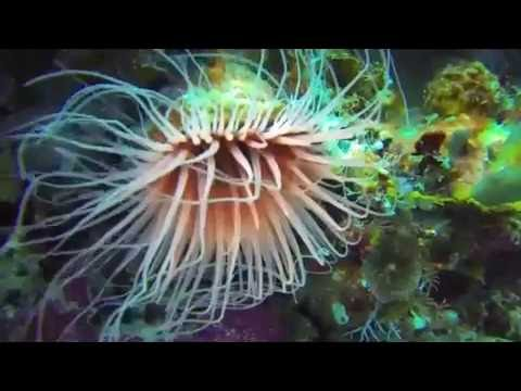 Beside Raja Ampat, Alor was the best place for diving in Indonesia