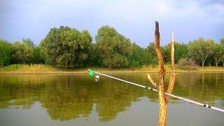 Норма вылова за 1,5 часа. Ловля сазана на жмых.Астраханская рыбалка в дождь.