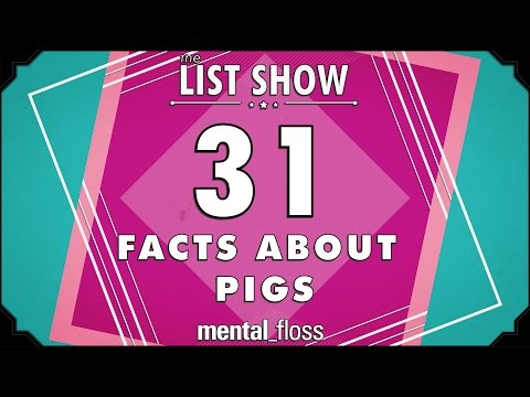 31 Facts about Pigs - mental_floss on YouTube - List Show (305)