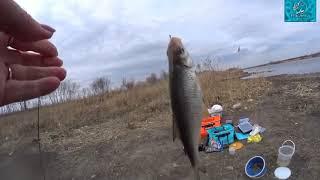 Рыбалка на Днестре 11 марта Караси проснулись
