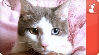 Healing Power of Pets: Woman with Multiple Sclerosis was saved by cat.