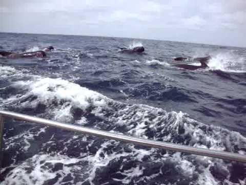 130712 Dolphins sighted in the Bay of Biscay