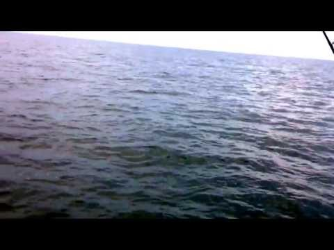 Texas Gulf of Mexico Offshore Fishing