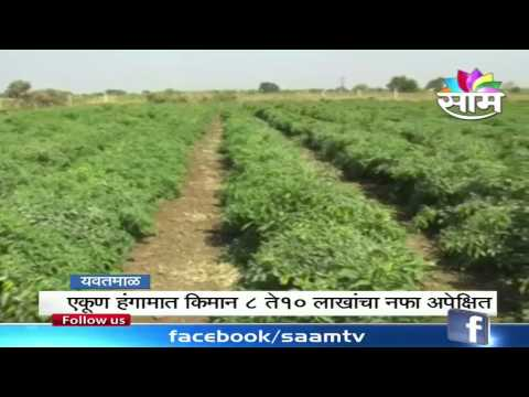 Vinod Kalaskars success story of Chilly farming