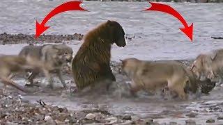 Животные которые не зассали снятые на камеру - Топ 15