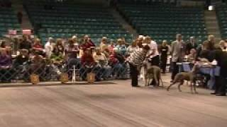 Moncton Kennel Club Dog Show Day 2 Nov 15, 2009