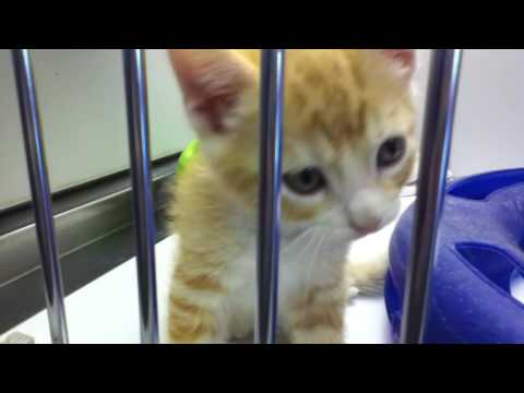 Kittens Meowing at a Pet Store - 9/27/2010