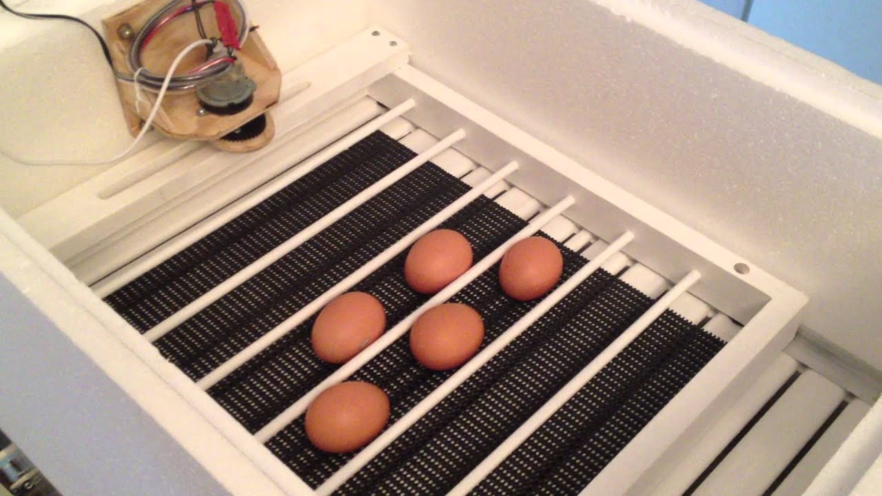 chicken egg incubator instructions