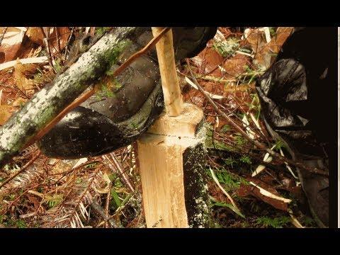 Stump Hearth Bow Drill in The Rain