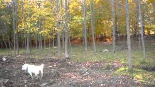 10 Acres Land For Sale By Owner in Meaford Ontario