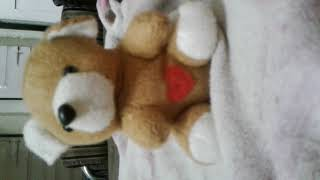 CUET TEDDY FUNNY JOKES