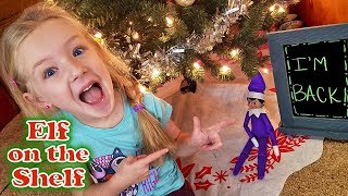 Purple Elf on the Shelf - Decorated My BOX FORT!!! Sparkles is Back! Day 1