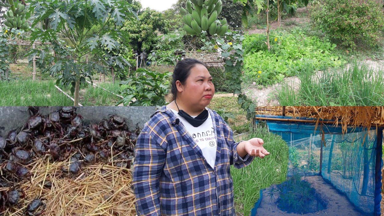 เกษตรผสมผสาน!!เลี้ยงกบเลี้ยงปลาปูนาแมงดาหอยขม..ปลูกผักขายมีรายได้เหลือเดือนละ2หมื่นบาท