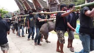 Rambu Solo Tana Toraja unik adalah Pemakaman Termahal di Dunia