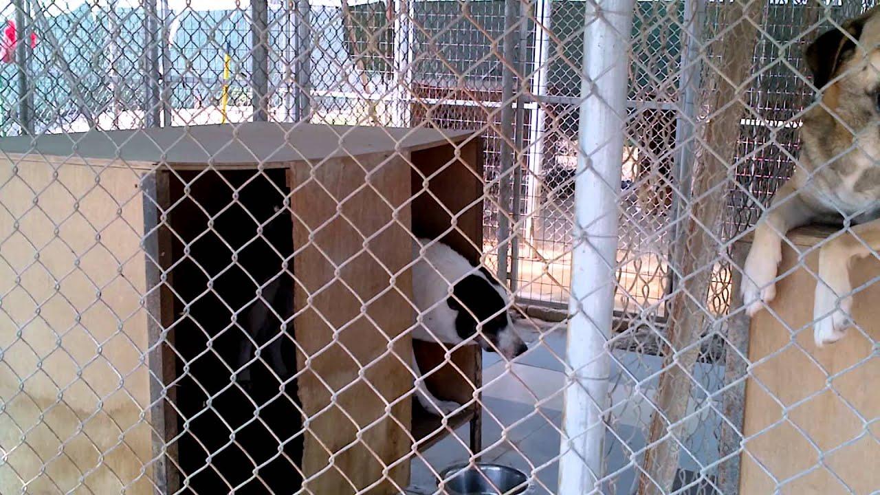 Trikala Shelter Dogs Greece - Aris For Adoption & Sponsorship