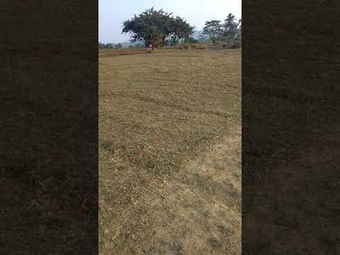 kandalapalli cricket ground
