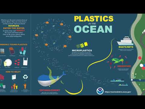 Effects of Plastic Pollution on Marine Animals