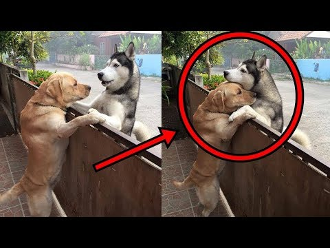 Cute is Not Enough - Funny Cats and Dogs Compilation #243