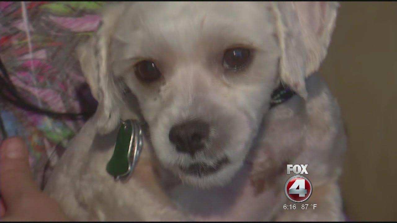 Petsmart Groomer Injures Dog Youtube