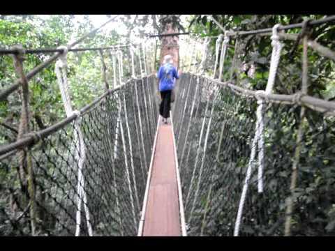 Canopy Walk Taman Negara National Park. 2nd video & Canopy Walk Taman Negara National Park. 2nd video - YouTube