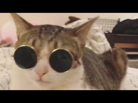 Download 65+  Gambar Kucing Paling Keren Terbaru Gratis