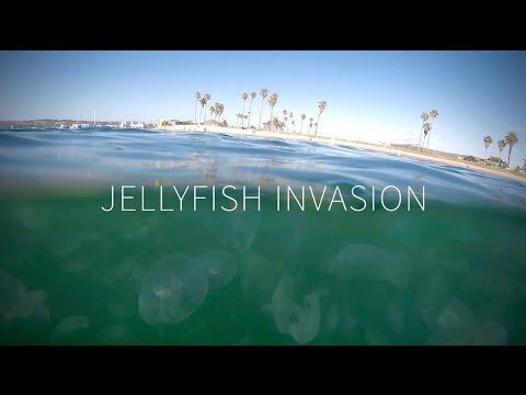 Jellyfish Invasion In San Diego