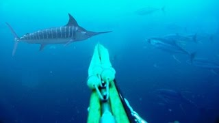 Blue Water Spearfishing Pesca Sub, com Diego Santiago