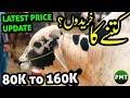 Demand 80 to 160K Sohrab Goth Cow Mandi 2018 Karachi Episode 29  Qurbani Cows for Eid ul Adha 2018
