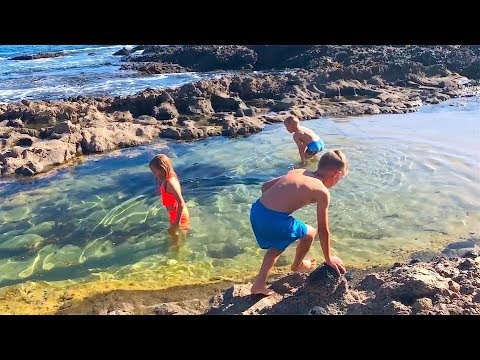 KIDS FIND CREATURES IN TIDE POOLS AT BEACH!