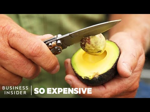 Maddox - Why Avocados Are So Expensive?