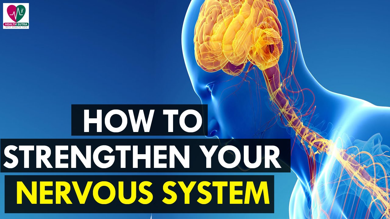 How to Strengthen Your Nervous System - Health Sutra