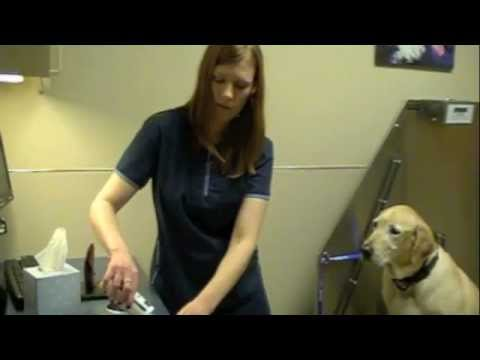 How to clean your dog's ears