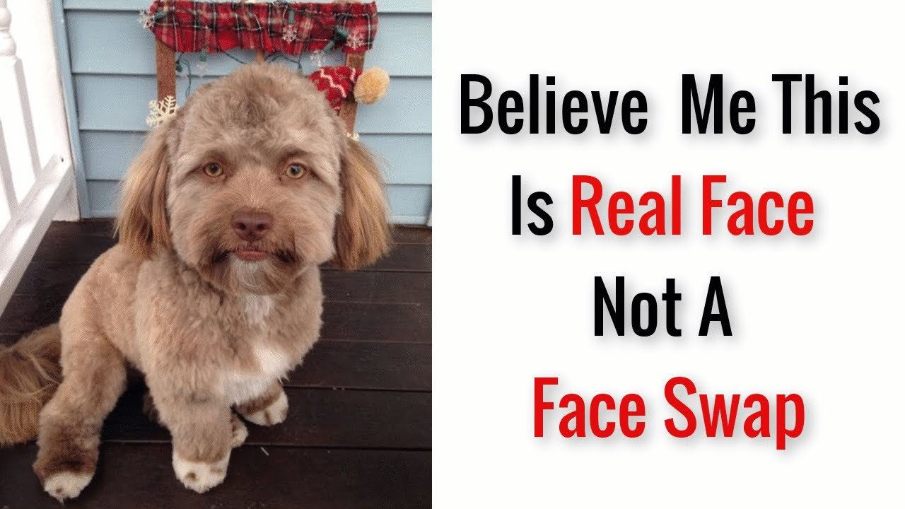 This Dog Has A 'Human Face' And It Will Make You More Uncomfortable The  Longer You Stare At It