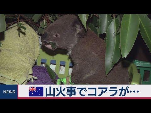 オーストラリア 山火事でコアラが\u2026 , YouTube