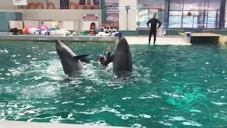 Dolphin Show | Muhteşem Yunus Şov | Crazy Dolphin Show | Spectacolul delfinilor | Yunus Gösterileri