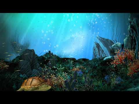 Видео обои - Подводный мир