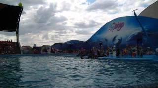 Футбол с дельфинами:-))) Дельфинарий в Кирилловке  25.07.2013г.