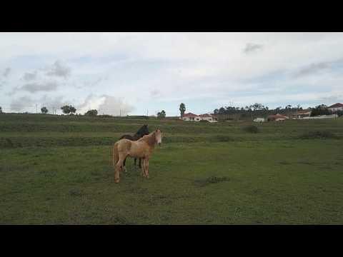 Fantástica Moradia T4 Zibreira - Torres Vedras
