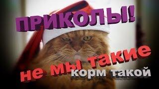 Коты-убийцы среди нас! Приколы декабрь 2018   Топ приколы котики