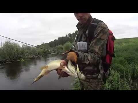Рыбалка в Омской области. Река Оша. - YouTube